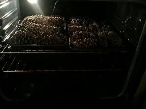 pinecone2
